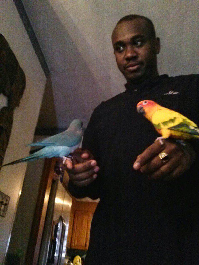 neite and birds